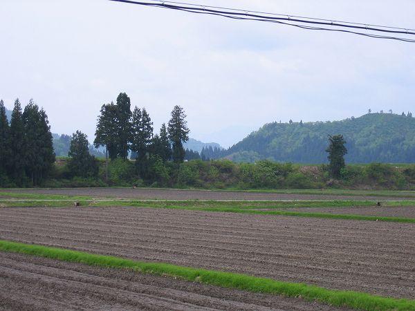 今朝の魚沼産コシヒカリの田んぼはくもりですが、あたたかいです