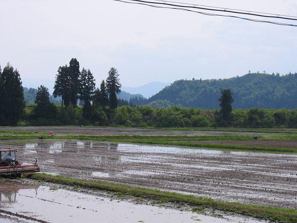 今日も魚沼産コシヒカリの田んぼはあたたかい一日になりました