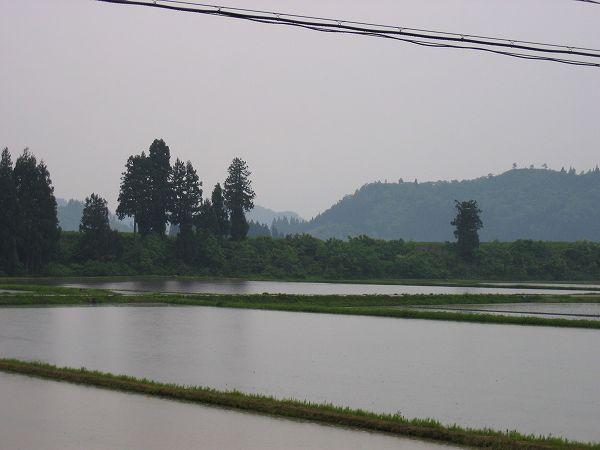 魚沼では午後になってから雨が降り始めました