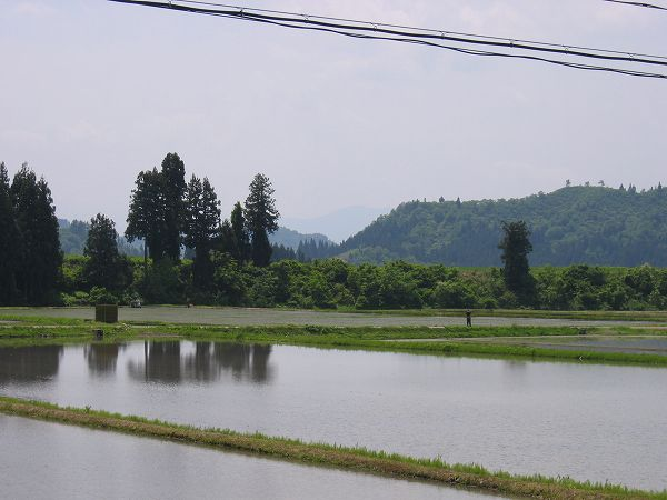 魚沼産コシヒカリの田んぼはいい天気になりました