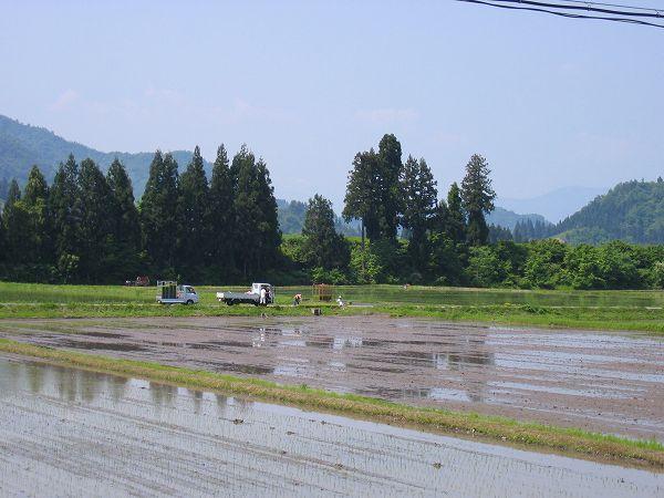 農作業日和の日曜日に田植え作業は真っ盛り