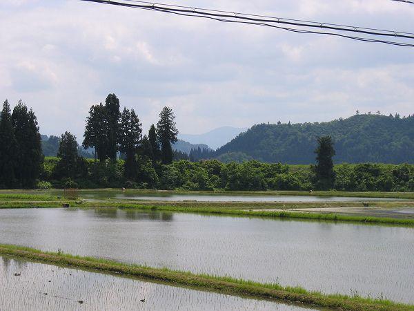 魚沼産コシヒカリの田んぼはだんだんいい天気になって青空が広がってきました