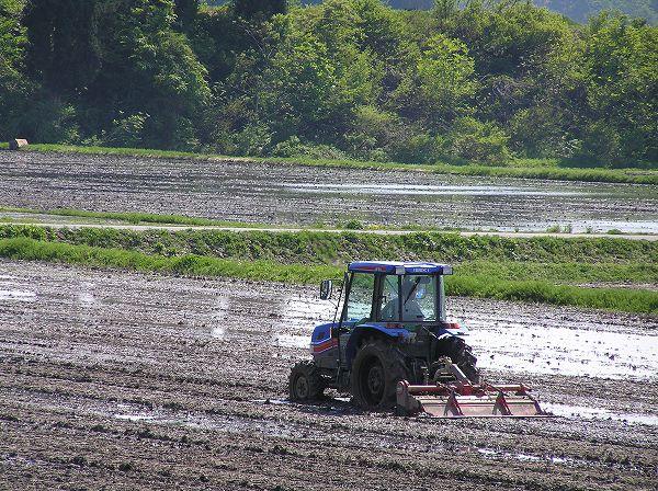 魚沼産コシヒカリの田んぼはよく晴れて、絶好の農作業日和になりました