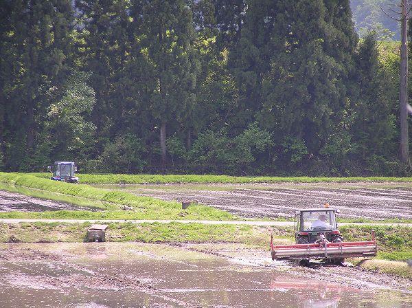魚沼産コシヒカリの田んぼでのトラクターによる作業