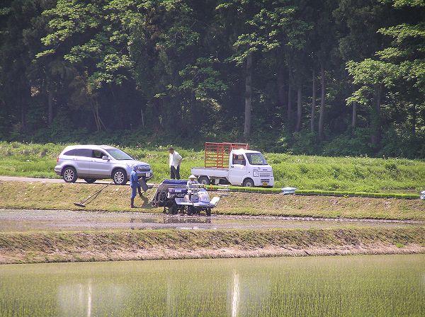 農作業日和の日曜日に魚沼産コシヒカリの田植え作業は真っ盛り