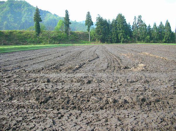トラクターによる田起こし作業や代かき作業が行われる時期になりました