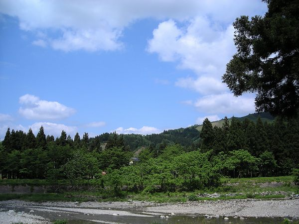 魚沼産コシヒカリの田んぼの脇を流れる水無川