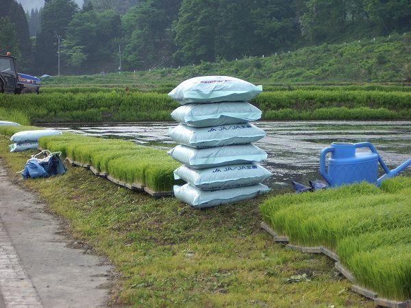 田んぼの脇では田植え作業の段取りが行われています