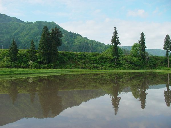 魚沼産コシヒカリの田んぼは今日も爽やかな朝を迎えました