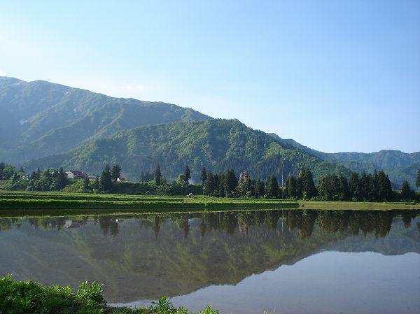 風がなく穏やかなので、田んぼの水面に景色が映っています