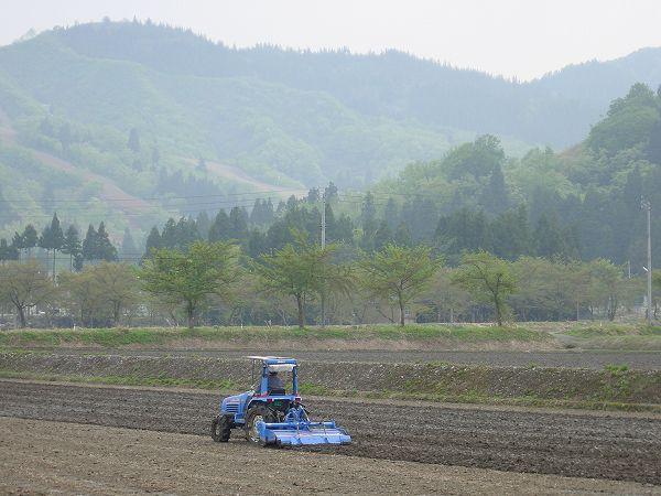 魚沼産コシヒカリの田んぼの一部ではトラクターによる田起こし作業が行われました