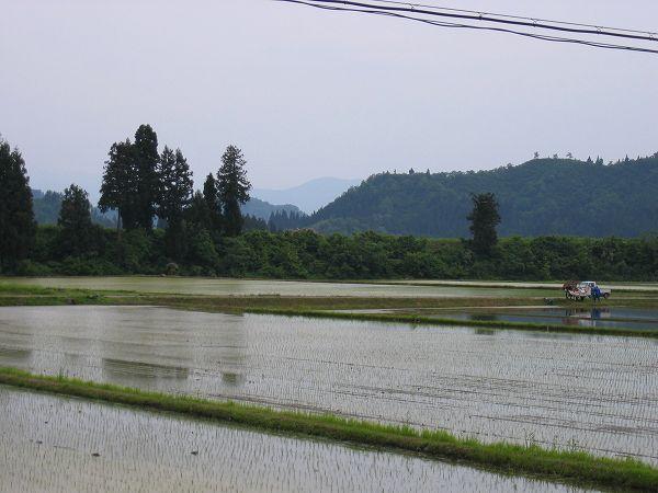 魚沼産コシヒカリの田んぼは爽やかな初夏の一日でした