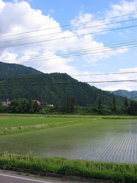 魚沼産コシヒカリの田んぼは午後になってから青空が見えていい天気になりました