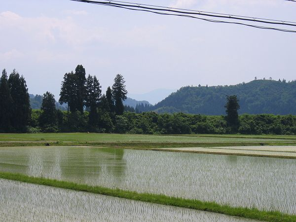 新潟県南魚沼市は日射しが強く、夏のような暑さになりました