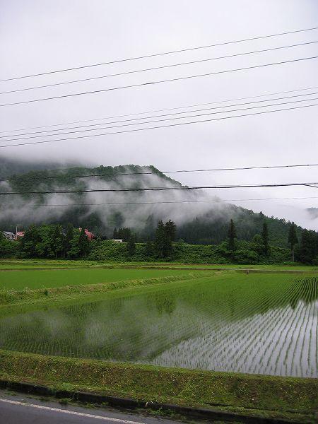 梅雨入りした魚沼産コシヒカリの田んぼは今朝も雨降りです