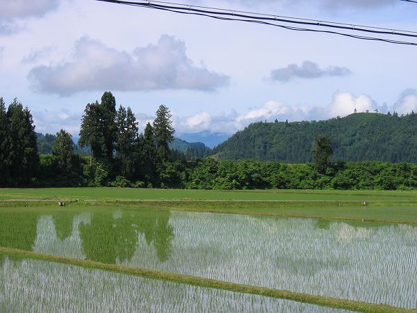 魚沼は雨上がりで青空が広がっていい天気になりました
