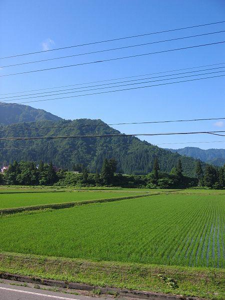 今朝の新潟県南魚沼市は澄んだ青空が広がっています