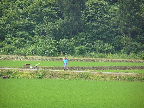 田んぼでは溝切り作業を行っている人がいます