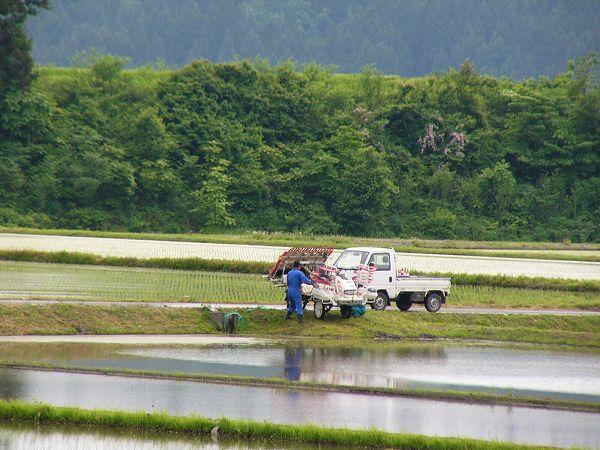 午後には田植え作業をしている人がいました