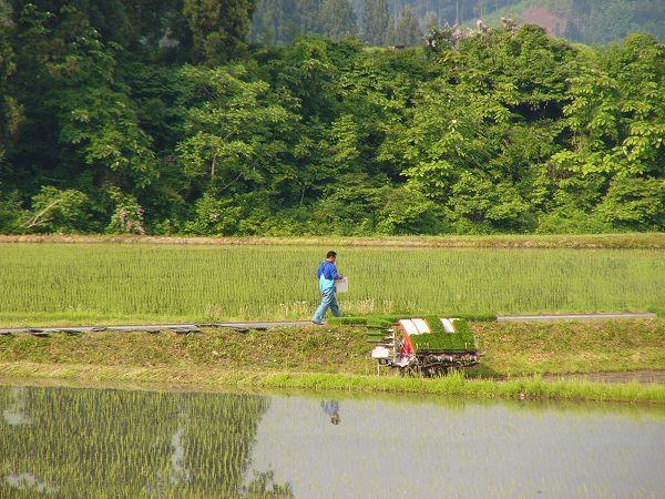 田んぼでは田植え作業の準備が行われています
