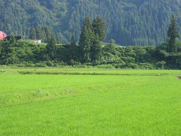 今日の新潟県南魚沼市は蒸し暑いです