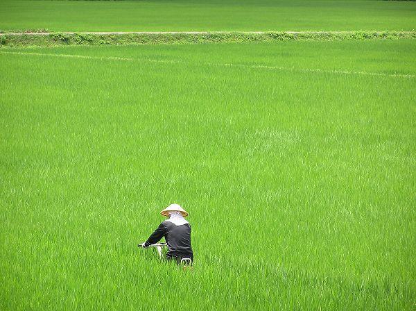 暑い中、田んぼで溝切り作業が行われています