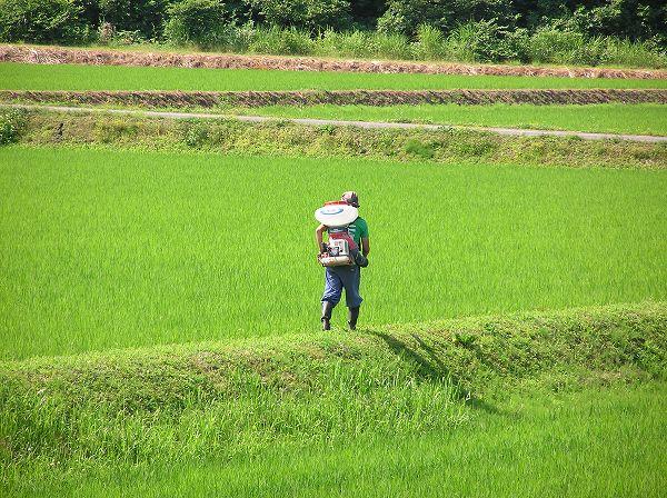 田んぼの畦では農作業を行っている人がいます
