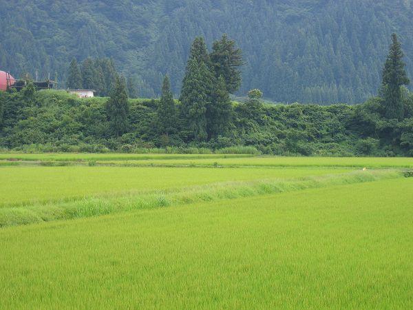 今日の新潟県南魚沼市はくもりで蒸し暑いです