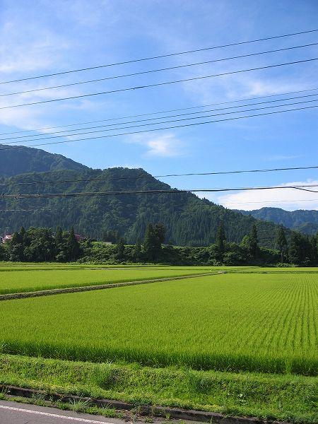 天気がよく涼しい朝です@魚沼産コシヒカリの田んぼ