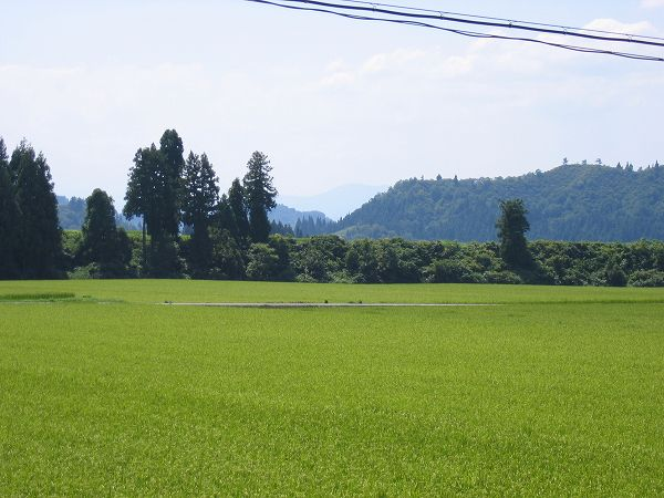 今日もまた魚沼産コシヒカリの田んぼは暑い一日になりました