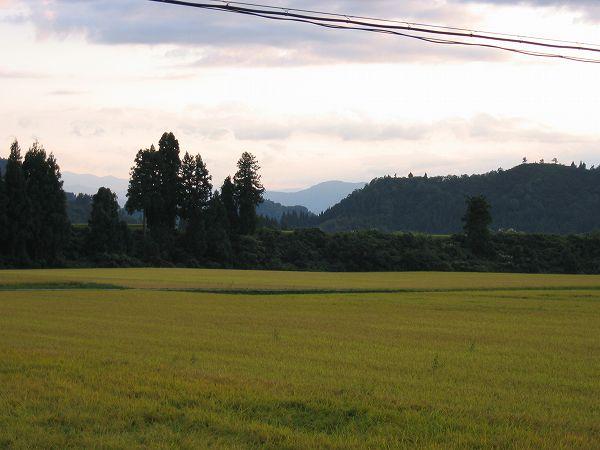 夕方近くになって、雲が多くなって涼しくなってきました