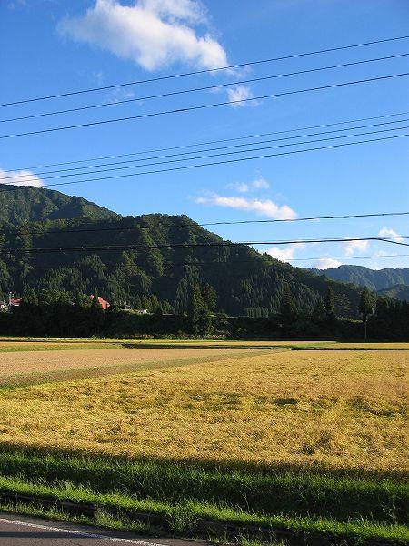 午後になって強い南風が吹いて魚沼産コシヒカリの田んぼは暑くなりました
