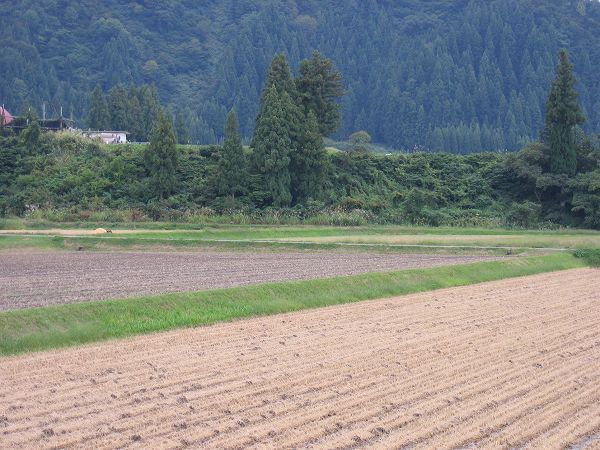 稲刈りが終わってからようやく秋らしくなってきました