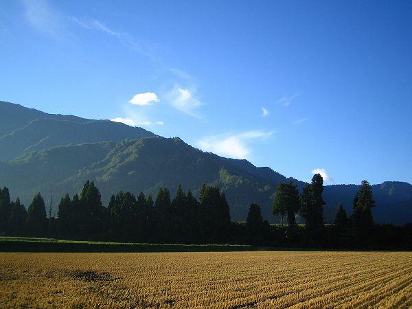 澄んだ青空が広がって気持ちのいい朝を迎えています