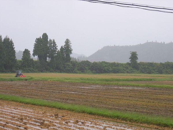 昨晩からずっと雨が降り続いています