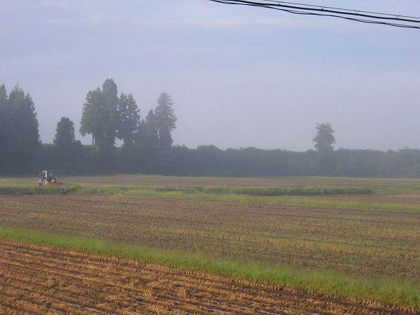寒い朝の田んぼ・・・霧が晴れてきました