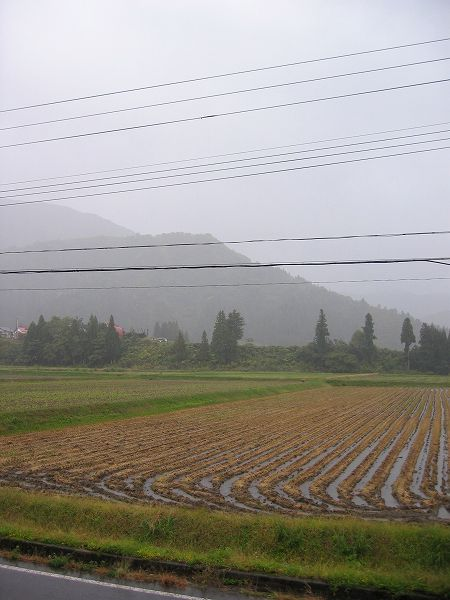 今日は雨降り・・・気温が高めです