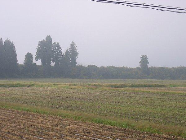 魚沼産コシヒカリの田んぼの向こうの山々はまだ霧の中です