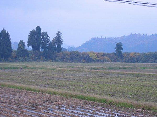 魚沼産コシヒカリの田んぼでは11月になってから雨の日が多いです