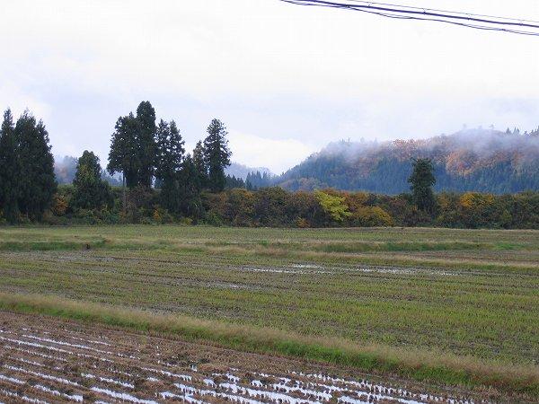 今日も朝から雨ですが、青空も見えてきました