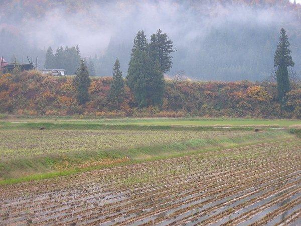 今朝の新潟県南魚沼市は冷たい雨が降っています