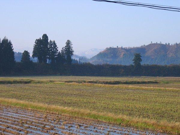 今朝は冷え込んで、田んぼの水面が凍っていました