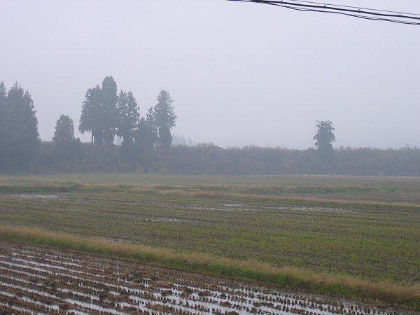 魚沼産コシヒカリの田んぼは冷たい雨が降っています