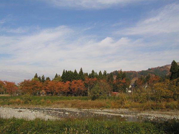 青空が広がって秋晴れのいい天気になりました
