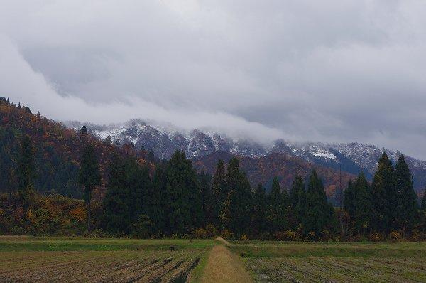 魚沼産コシヒカリの田んぼの向こうの山は中腹まで白くなっています