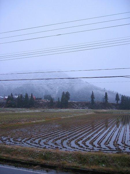 魚沼産コシヒカリの田んぼでは一日中雪が降っていました