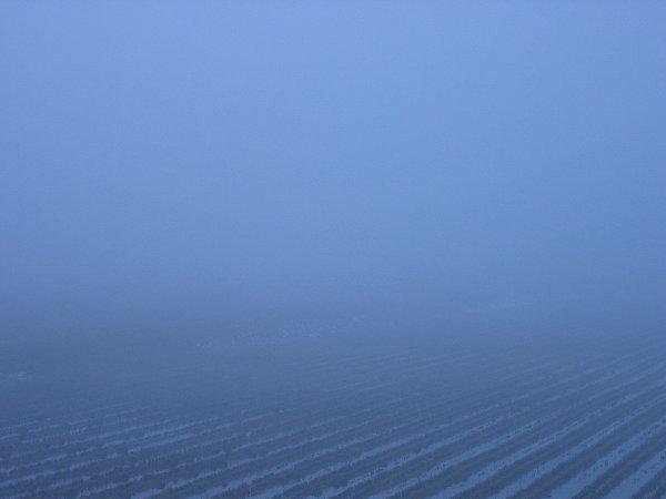 魚沼産コシヒカリの田んぼが霧に覆われています