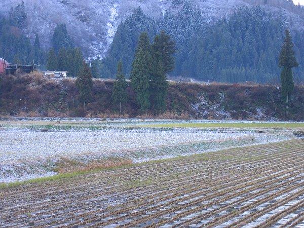 田んぼにうっすらと雪が積もりました