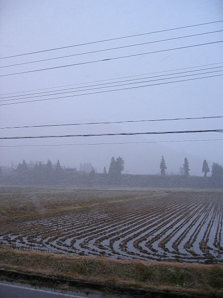 魚沼産コシヒカリの田んぼでは夕方近くになって天気が荒れてきました