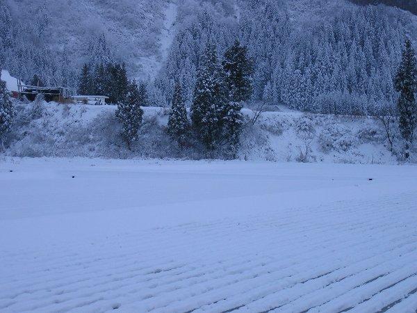 ひと晩で田んぼが雪景色に変わりました